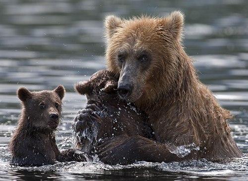 bearswater