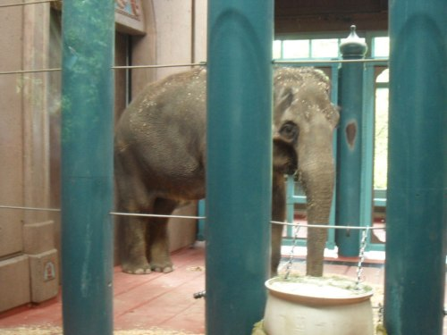 chai-woodland-park-zoo